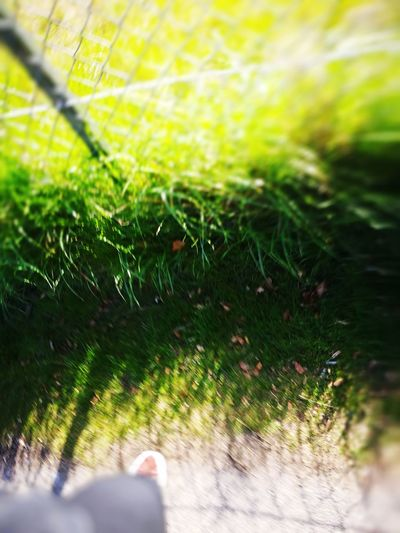 Grass Growth Nature Day Close-up Green Color Outdoors Plant Human Body Part Fragility One Person Freshness Beauty In Nature People