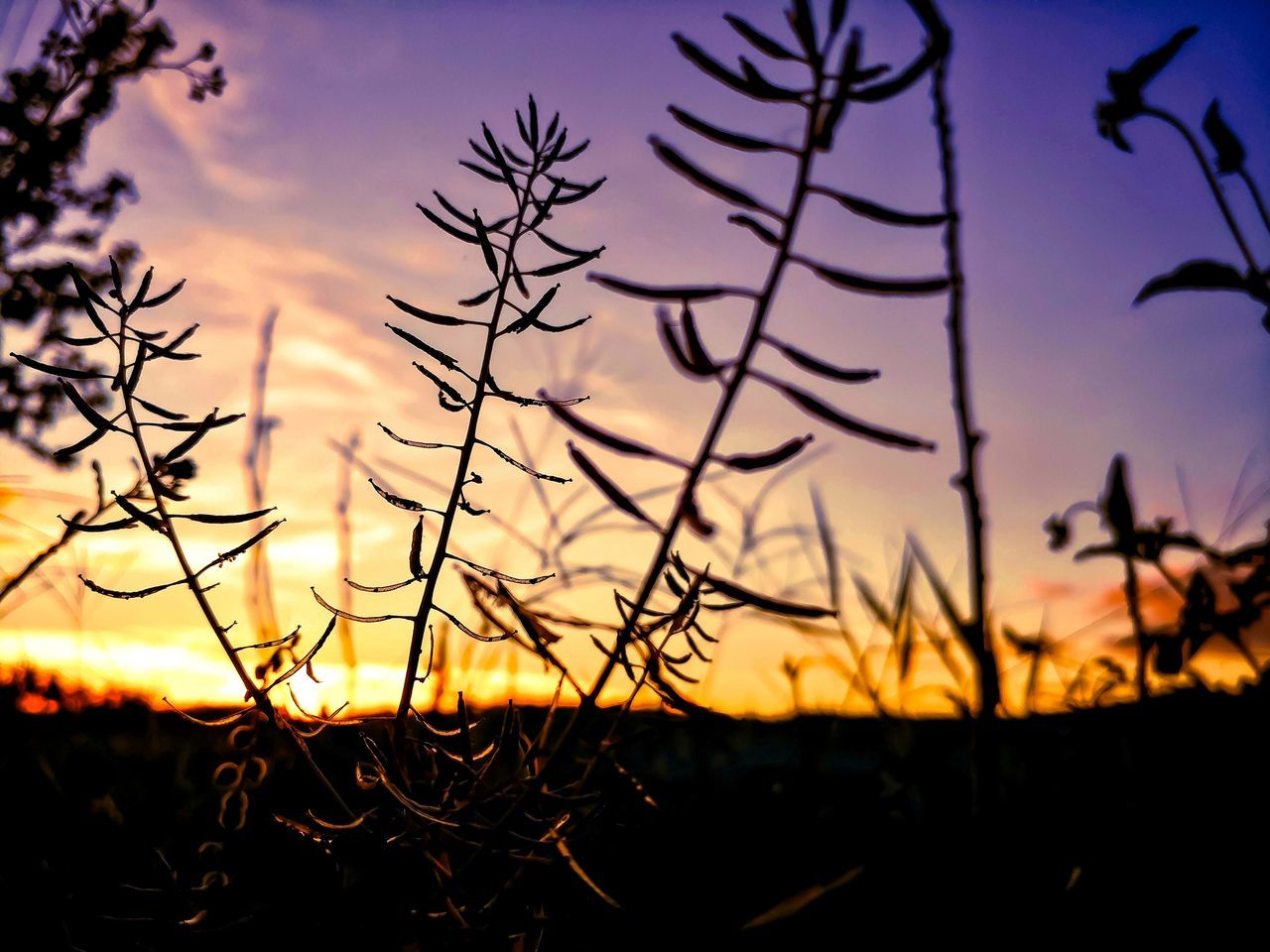 Sunset Nature Sky Beauty In Nature Plant Tranquility Silhouette Tranquil Scene No People Outdoors Growth Scenics Landscape Close-up Day Hues Dusk Sky Sunset Colors EyeEmNewHere
