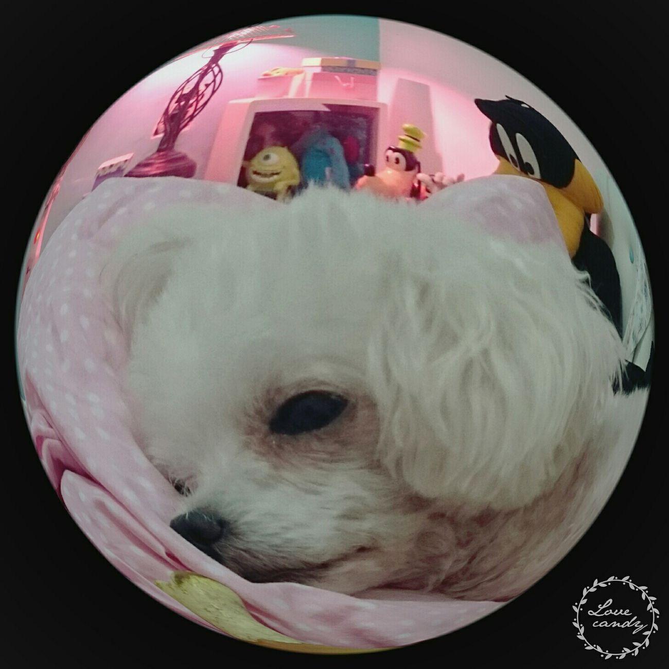 Life❤ Enjoying Life Make It Yourself Amor ♥ Dog Love Pepita