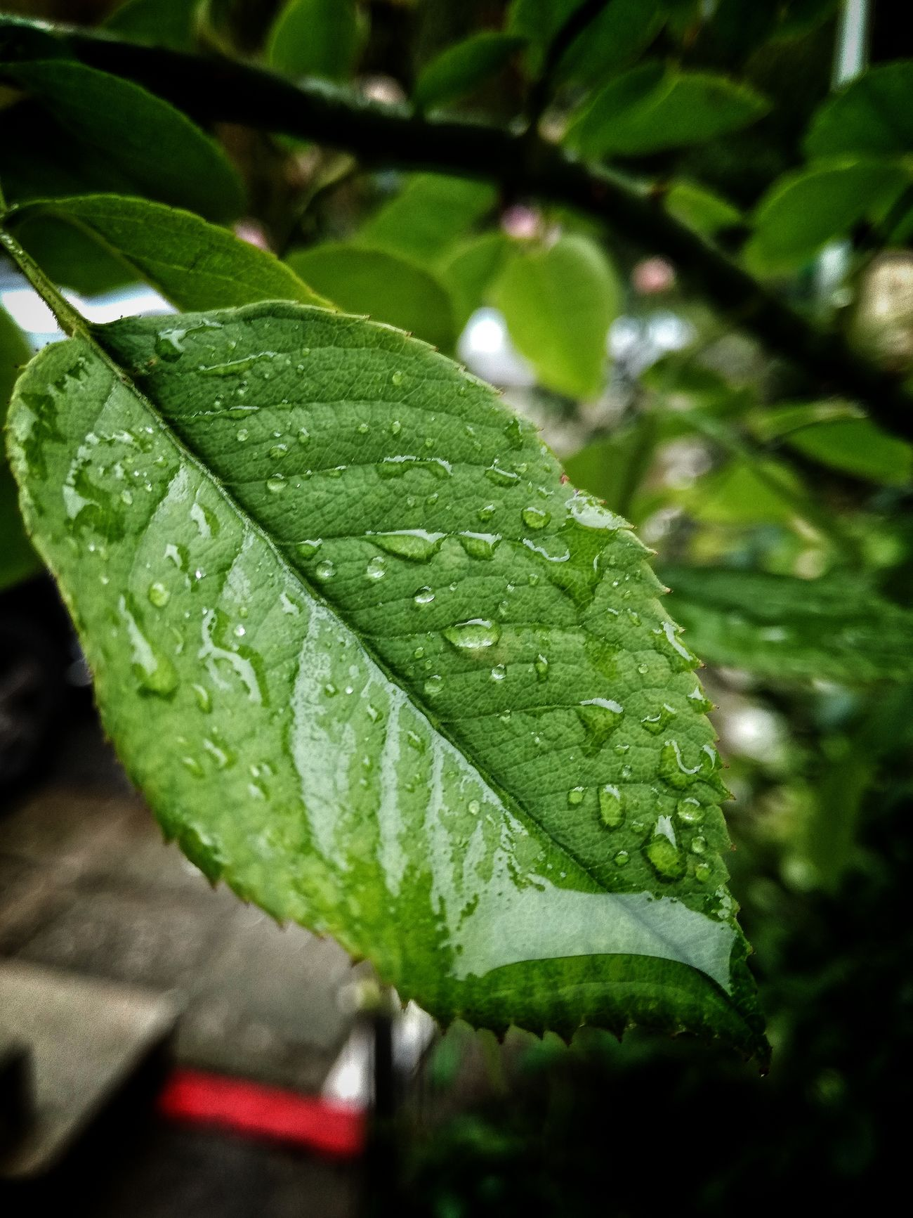 Water Drop Wet Close-up Green Color Fragility Water Drop Beauty In Nature Plant