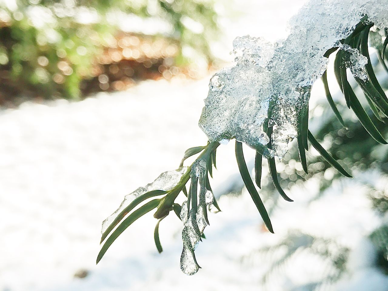Nature Focus On Foreground Close-up Winter Cold Temperature No People Beauty In Nature Twig Branch Growth Outdoors Ice Day Plant Tree Snow Fragility Ice