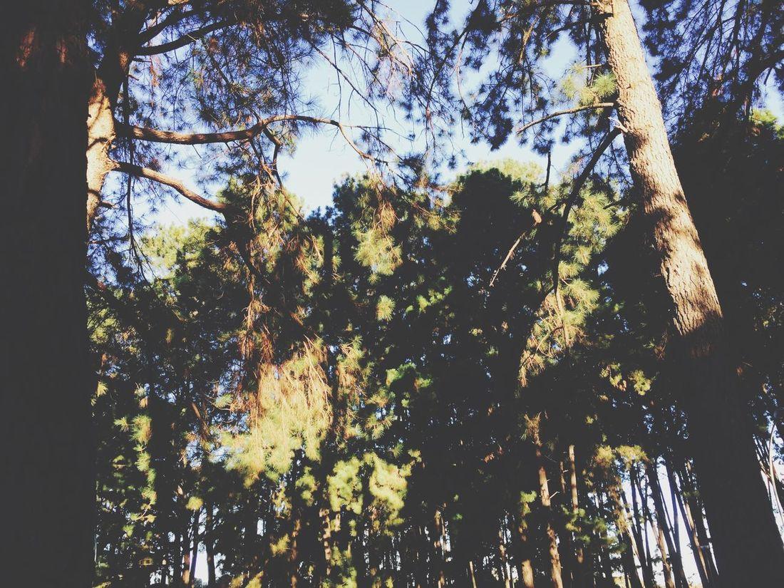 Tree🌳 Florest In💛🇧🇷💚