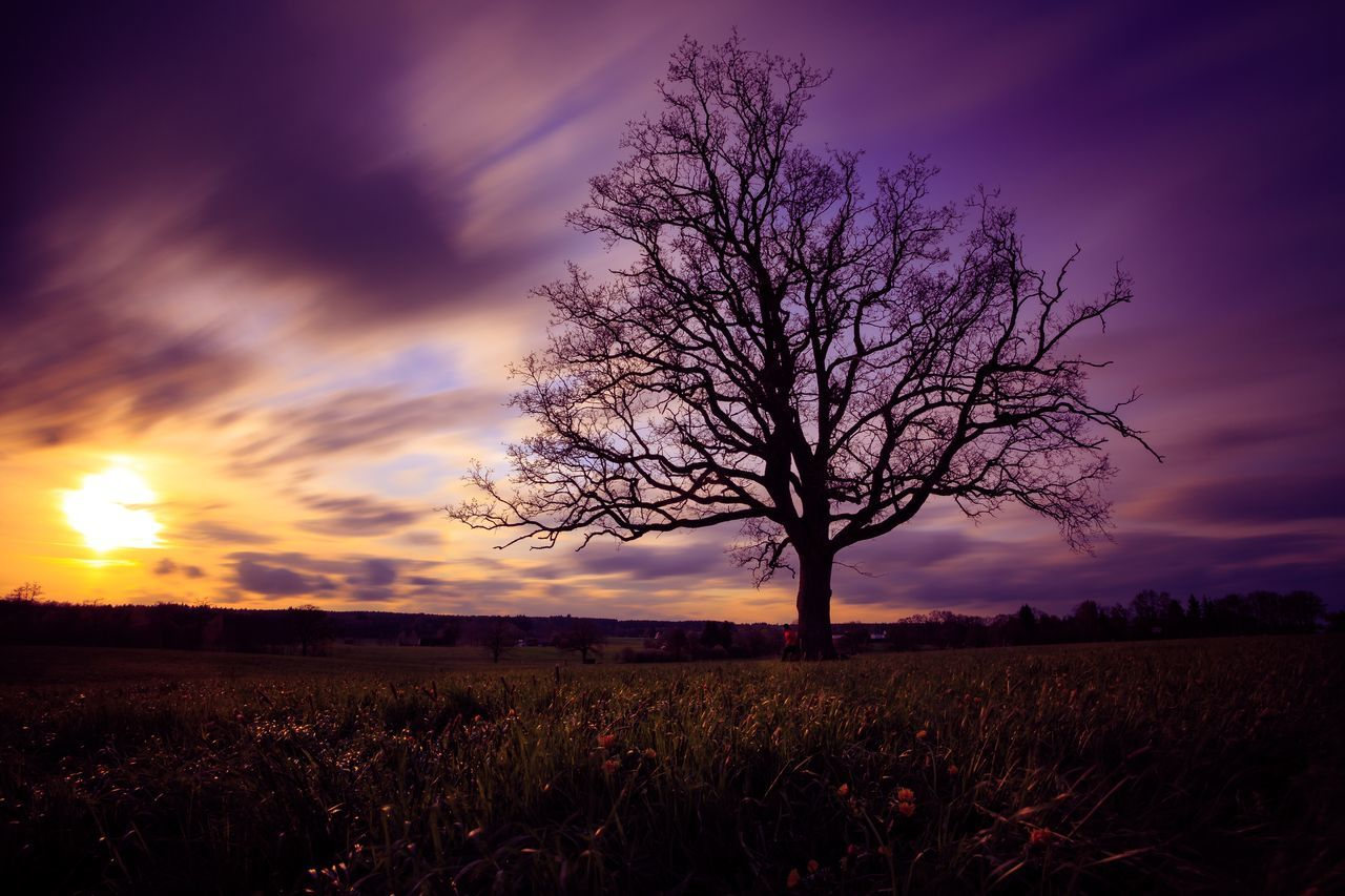 Allgäu Bad Wörishofen Cloud - Sky Field Landscape Light Longexposure Magic Nature Outdoors Sky Sun Sunset Tranquil Scene Tranquility Tree