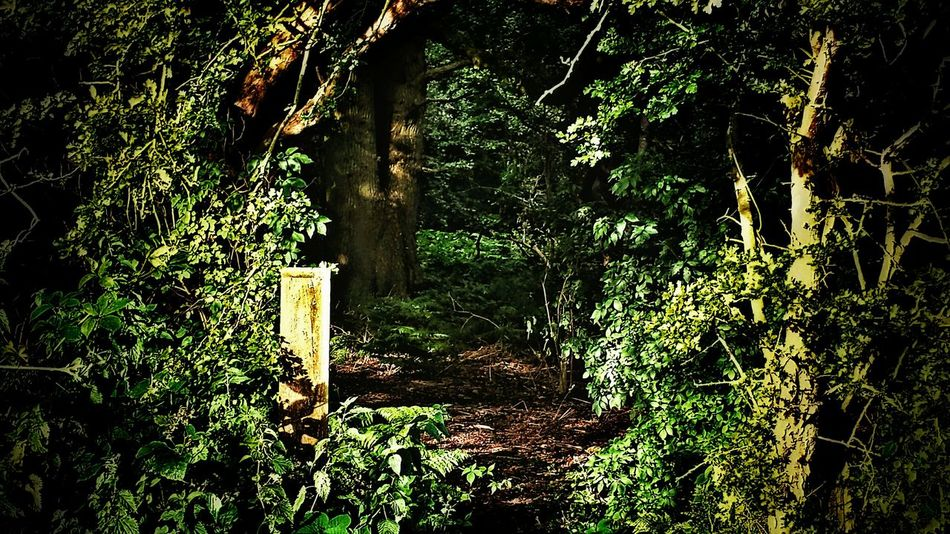 Enchanted Forest Tree Arch Forest Entrance Through The Arch Forest Trees Ferns Greenery @ Aston