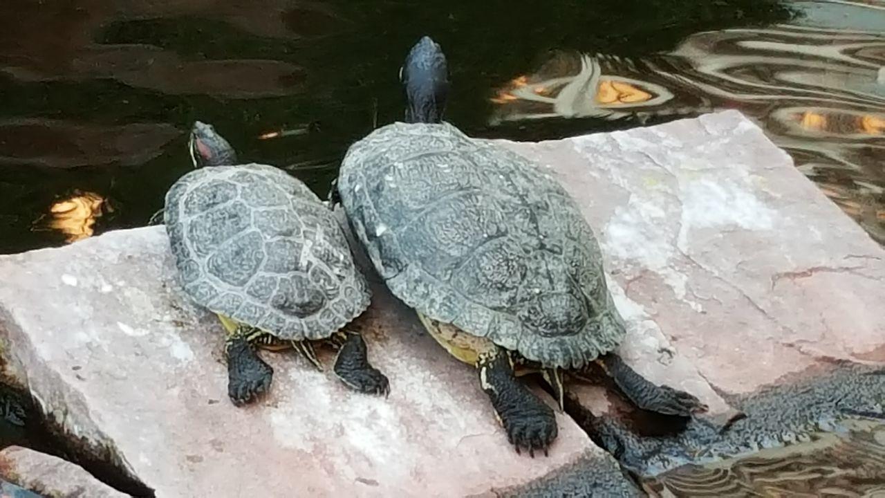 Turtle 🐢 Turtle Lifestyle Turtles