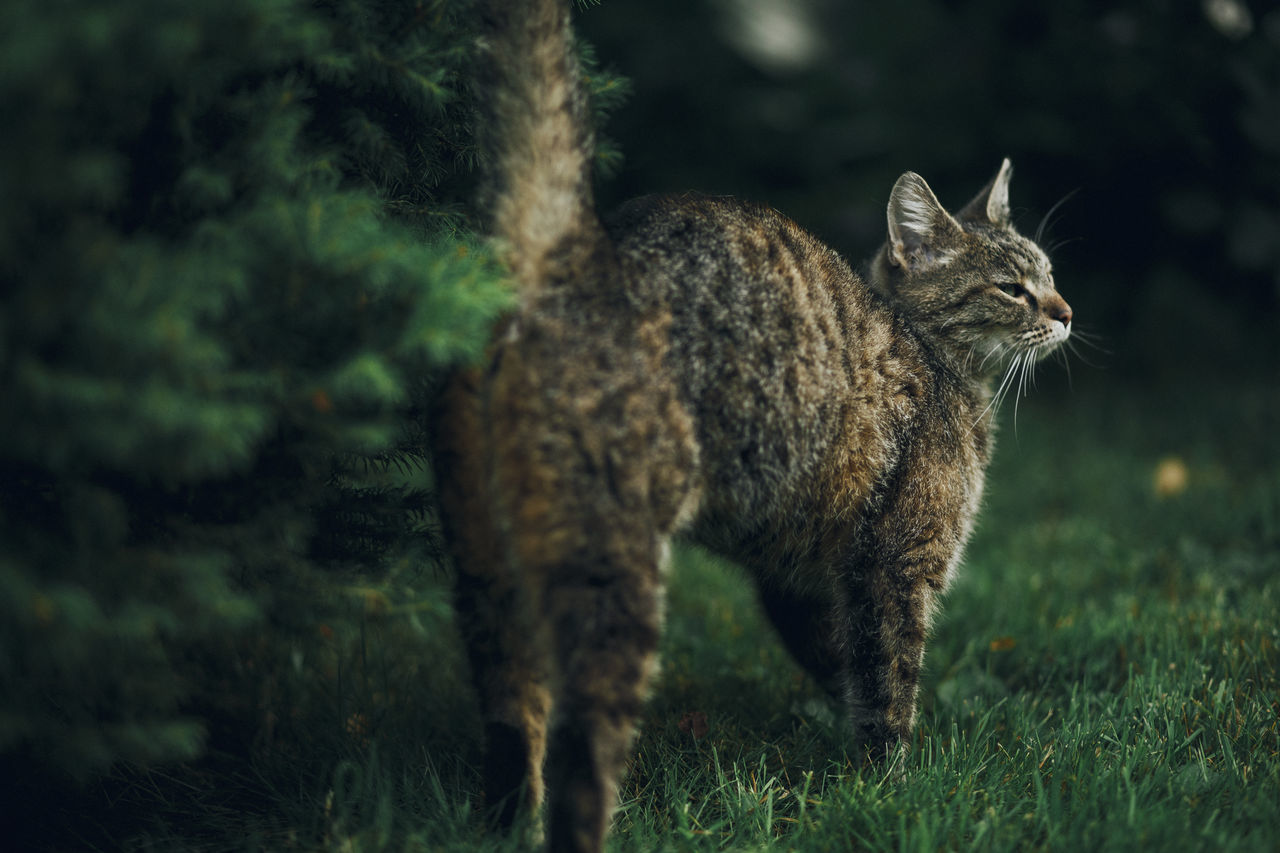 Lazy Sunday in Mielec, Poland. Animal Themes Animals In The Wild Day Domestic Animals Focus On Foreground Grass Mammal Nature No People One Animal Outdoors