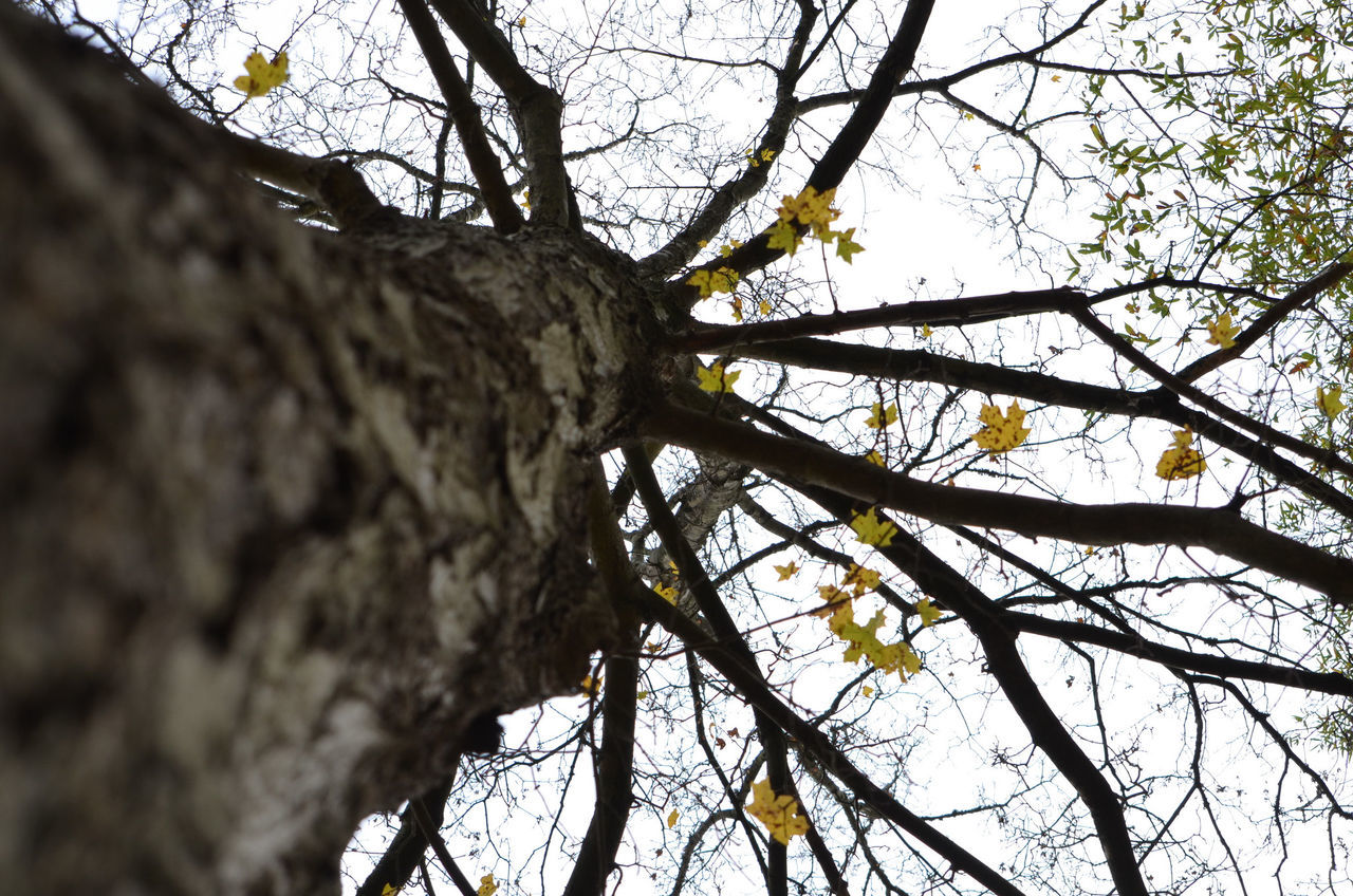 Keep looking up ::s:: Bare Tree Beauty In Nature Branch Close-up Day Flower Freshness Growth Low Angle View Nature No People Outdoors Sky Tree Tree Trunk