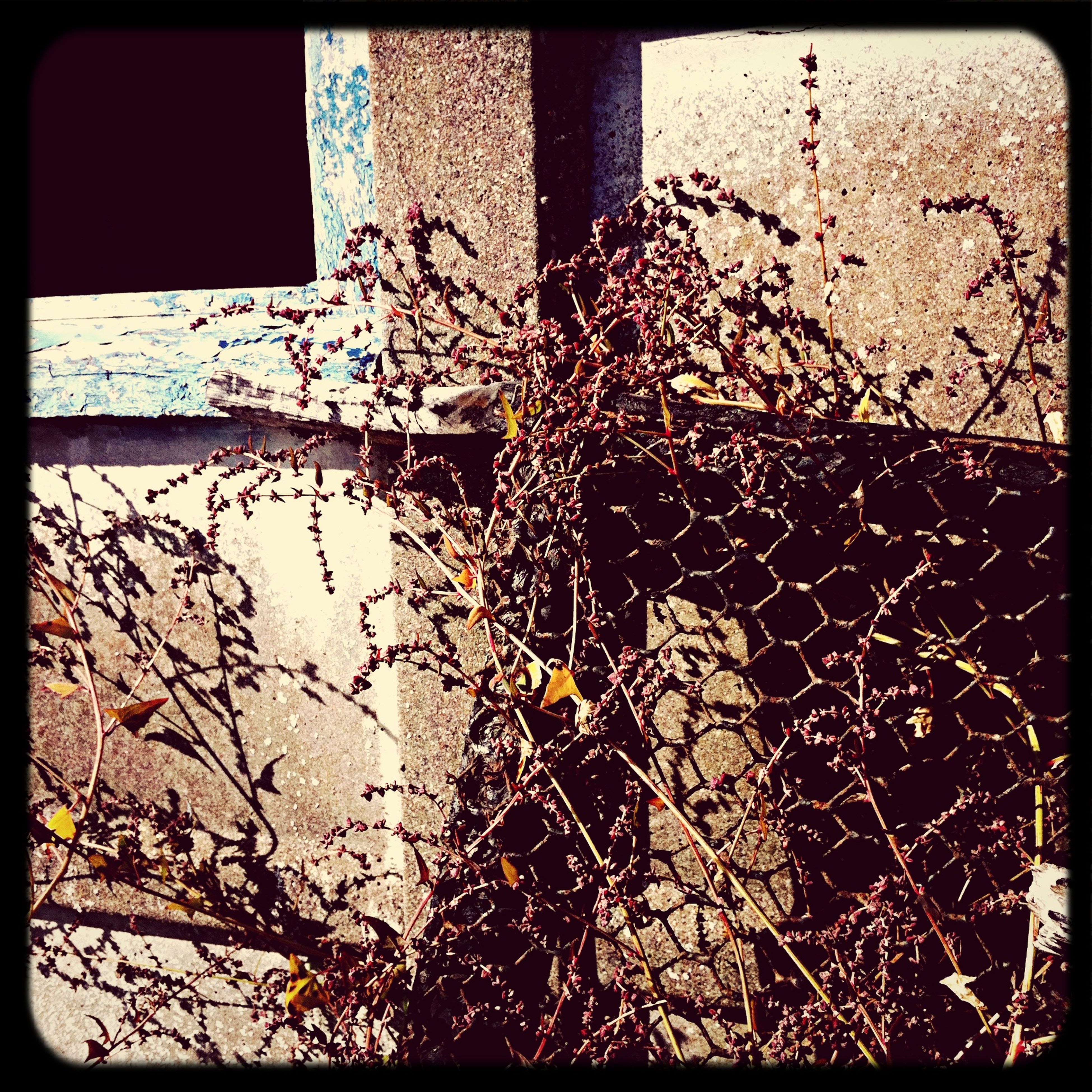 transfer print, auto post production filter, close-up, indoors, window, built structure, wall - building feature, branch, no people, metal, architecture, day, wall, sunlight, water, tree, plant, nature