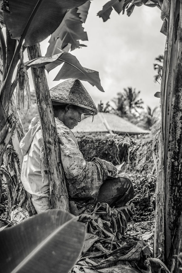 Agriculture Eating EyeEm Best Shots EyeEm Selects INDONESIA Natural Close-up Day Manual Worker Nature Outdoors Plant Real People Rice Field Ricefield