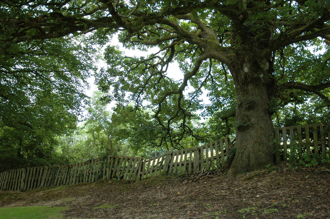 tree, tree trunk, nature, forest, growth, day, no people, outdoors, beauty in nature, branch