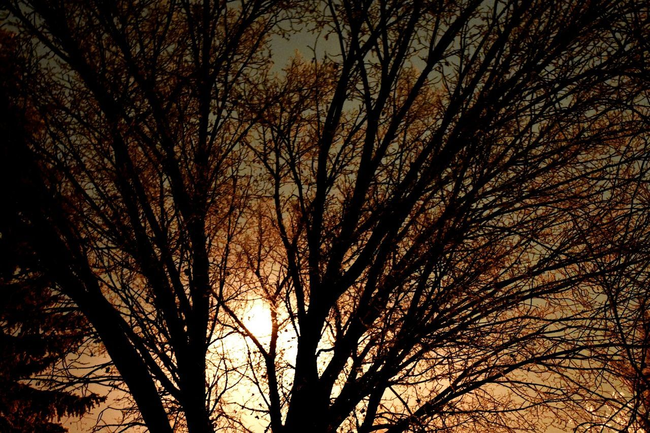 bare tree, branch, tree, nature, low angle view, tranquility, outdoors, no people, beauty in nature, sky, day