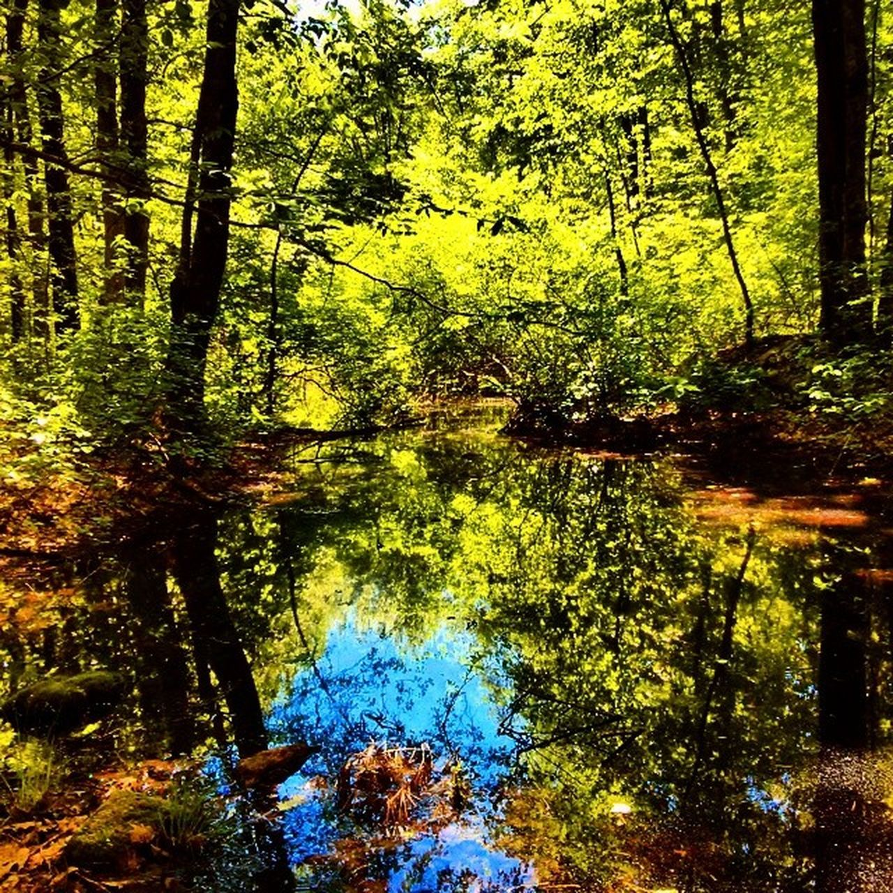 reflection, forest, nature, tree, growth, water, day, beauty in nature, outdoors, tranquility, no people