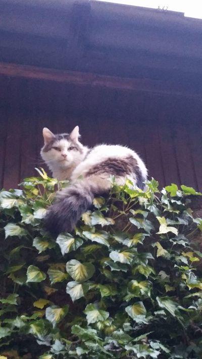 Besuch vom nachbars kater 😘 Cat Katze Besuch