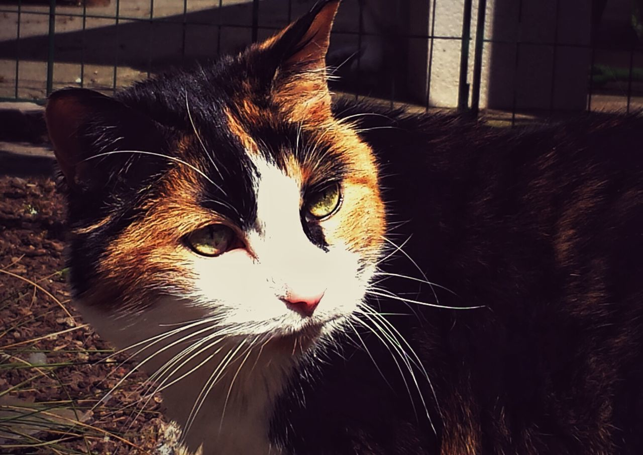 My beautiful 17 year young kitty Nyles...have had her since 3 weeks old.. One Of Mans Best Friends Cats Feline Calico Pets Animals Snapshots Of Life Capture The Moment Pets Corner