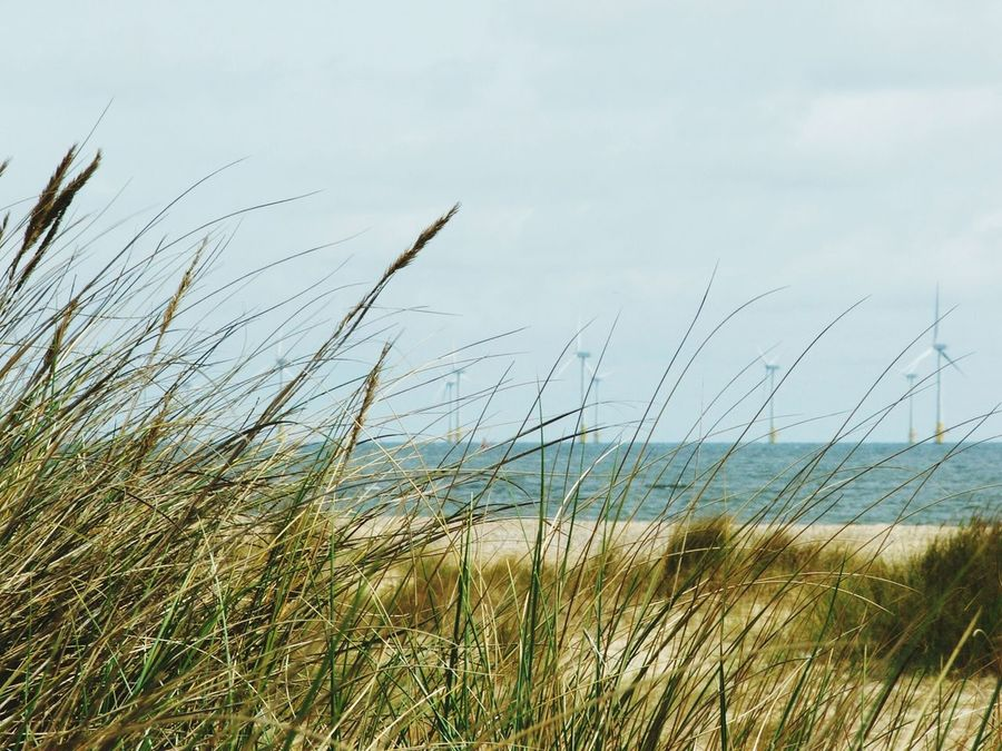 Wind Turbine Off Shore Great Yarmouth Uk Shot Through Seagrass