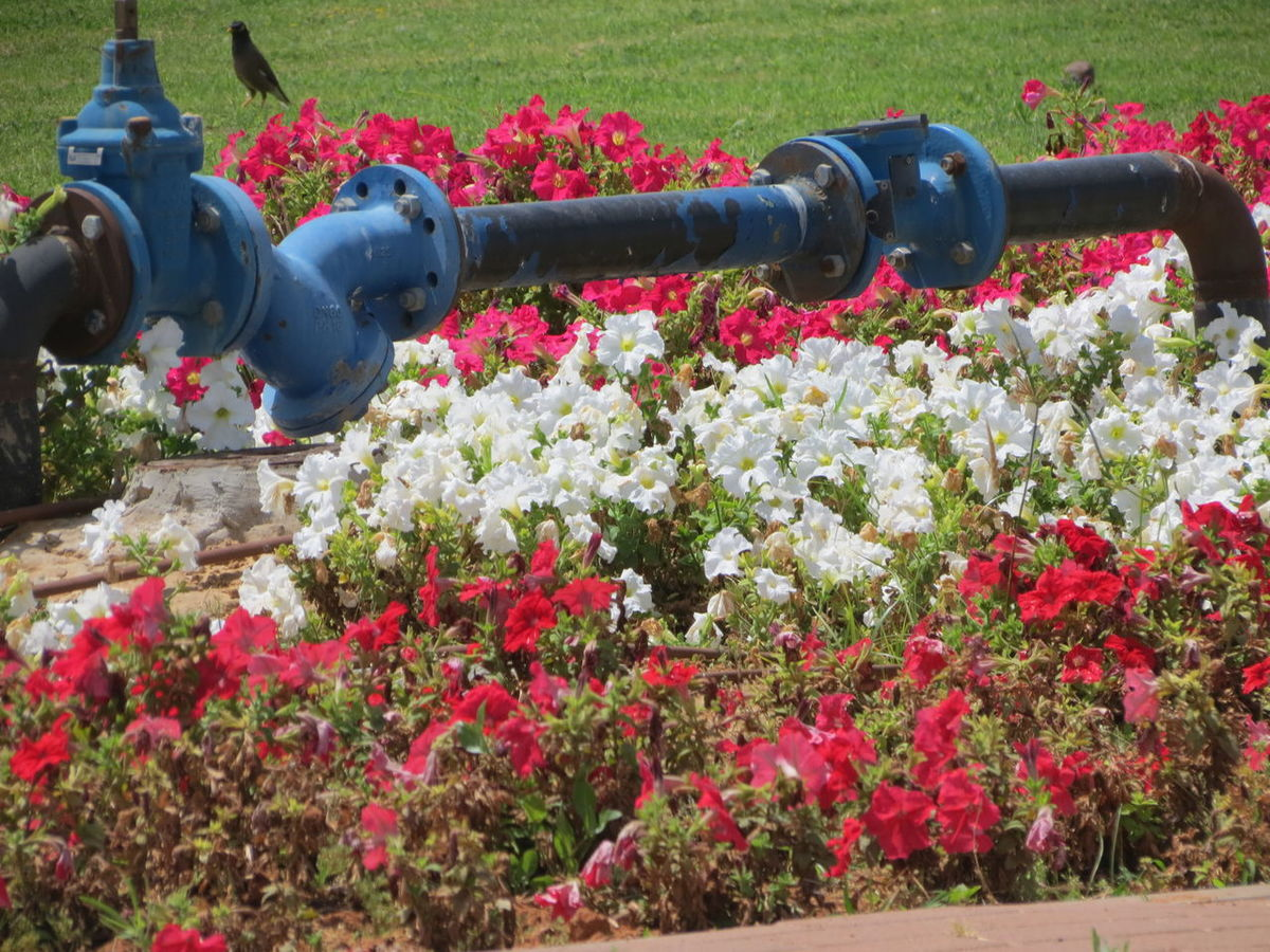 Beauty In Nature Close-up Day Flower Growth Metal Pipe Nature No People Outdoors Plant Urban Gardening