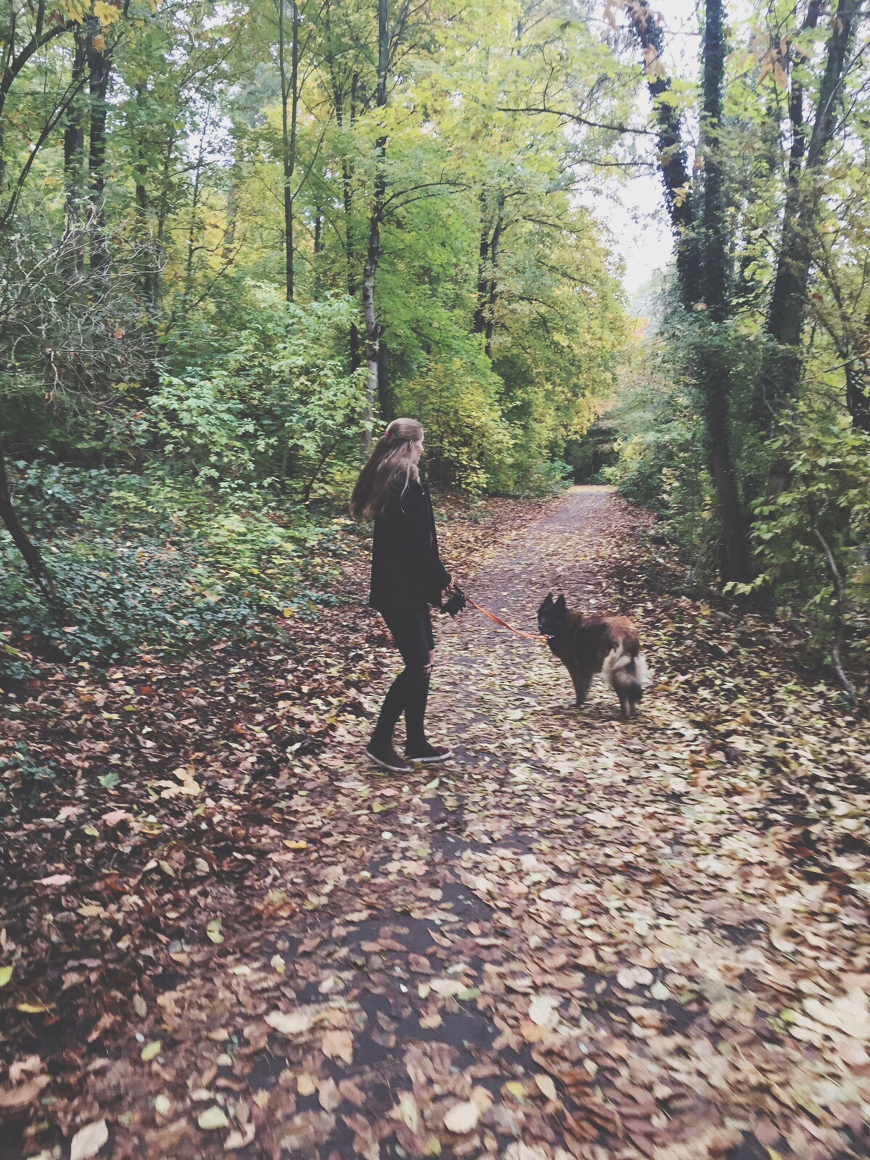 tree, forest, full length, lifestyles, rear view, leisure activity, walking, autumn, leaf, nature, growth, change, season, men, tree trunk, person, tranquility, day