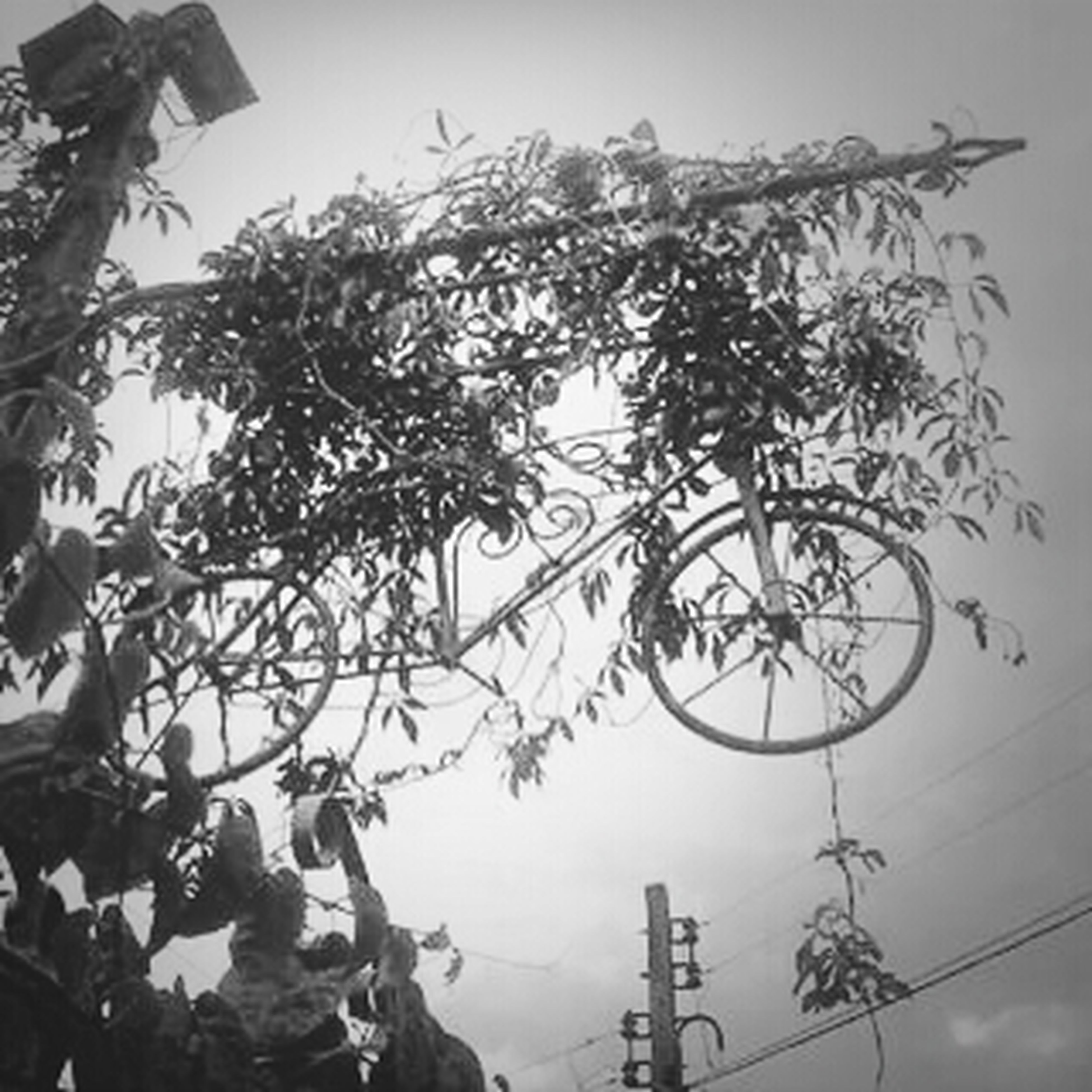 low angle view, tree, sky, clear sky, nature, day, bicycle, branch, outdoors, growth, no people, tranquility, mountain, beauty in nature, part of, sunlight, built structure, mode of transport, silhouette, pole