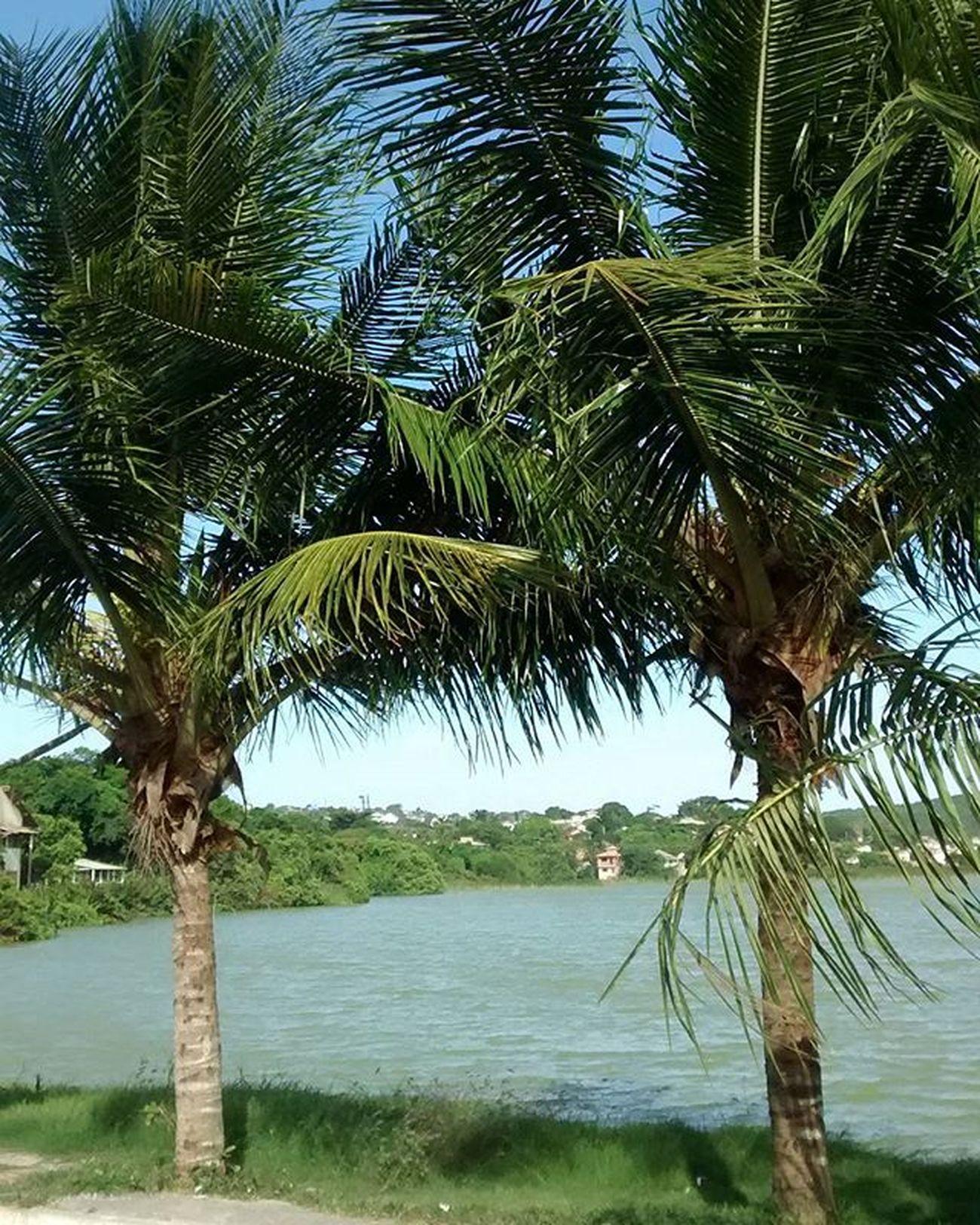 Palmeiras Palmeras Palme Palmtrees Lagoa Pond Stagno Estanque Geriba Semfiltro Buzios Buziosrj Riodejaneiro Rj40graus Errejota  Brasil Brazil