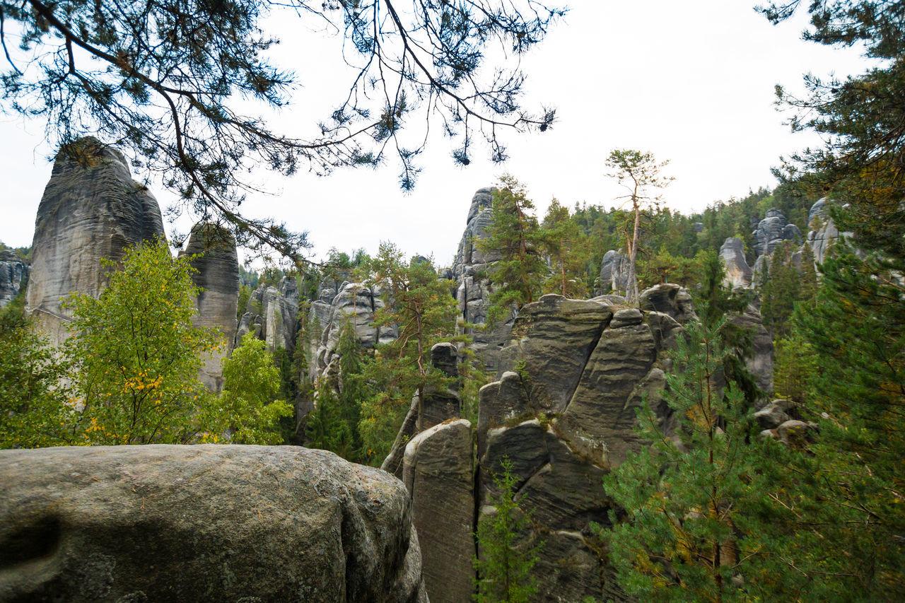 Adršpach Adršpachské Skály Nature Tree Mountain Park Rock - Object Stone