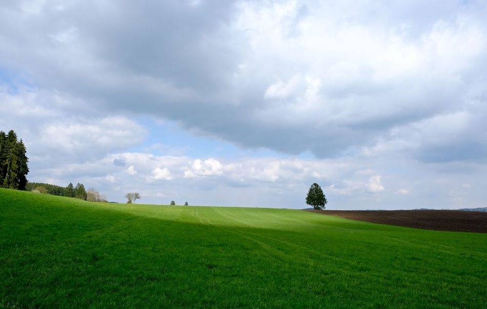 Agriculture Beauty In Nature Field Grass Green Color Landscape Nature No People Rural Scene Sky Tranquil Scene Tree