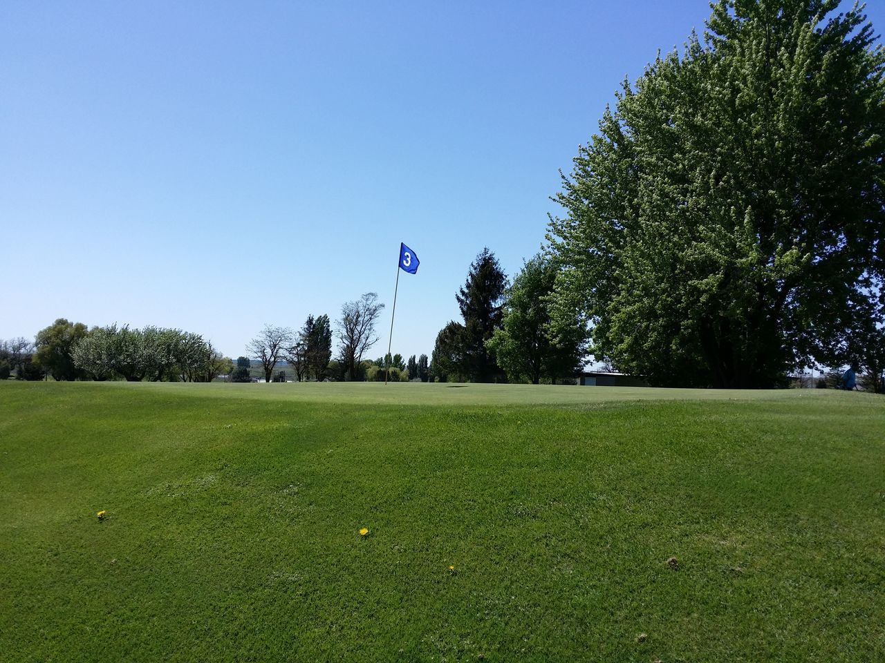 tree, flag, grass, green color, clear sky, outdoors, sport, golf, day, patriotism, green - golf course, no people, blue, growth, golf course, nature, playing field, beauty in nature, sky