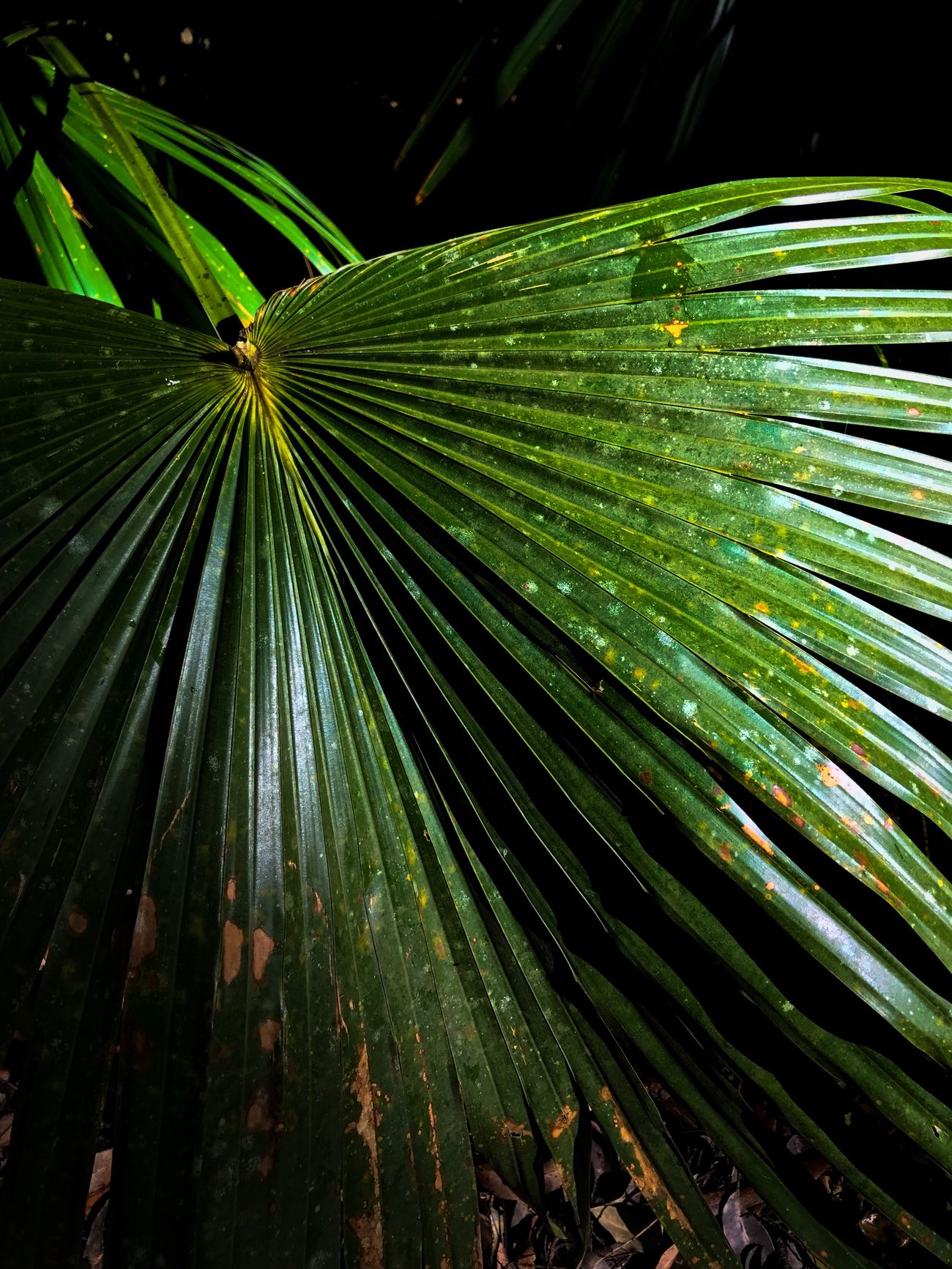 Sometimes the simple things are the most beautiful Green Color Nature Leaf No People Frond Growth Outdoors Close-up Beauty In Nature Tranquility Palm Tree Plant Backgrounds Day Water Fragility Freshness Awesome_shots Special👌shot Nature_perfection Growth Beauty In Nature Low Angle View Adventure Explore