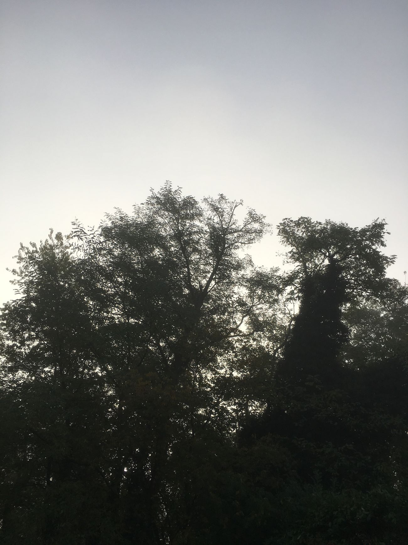 L'automne et fraîcheur quel beauté de la nature
