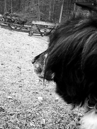 I Love My Dog Good Times memories Reality