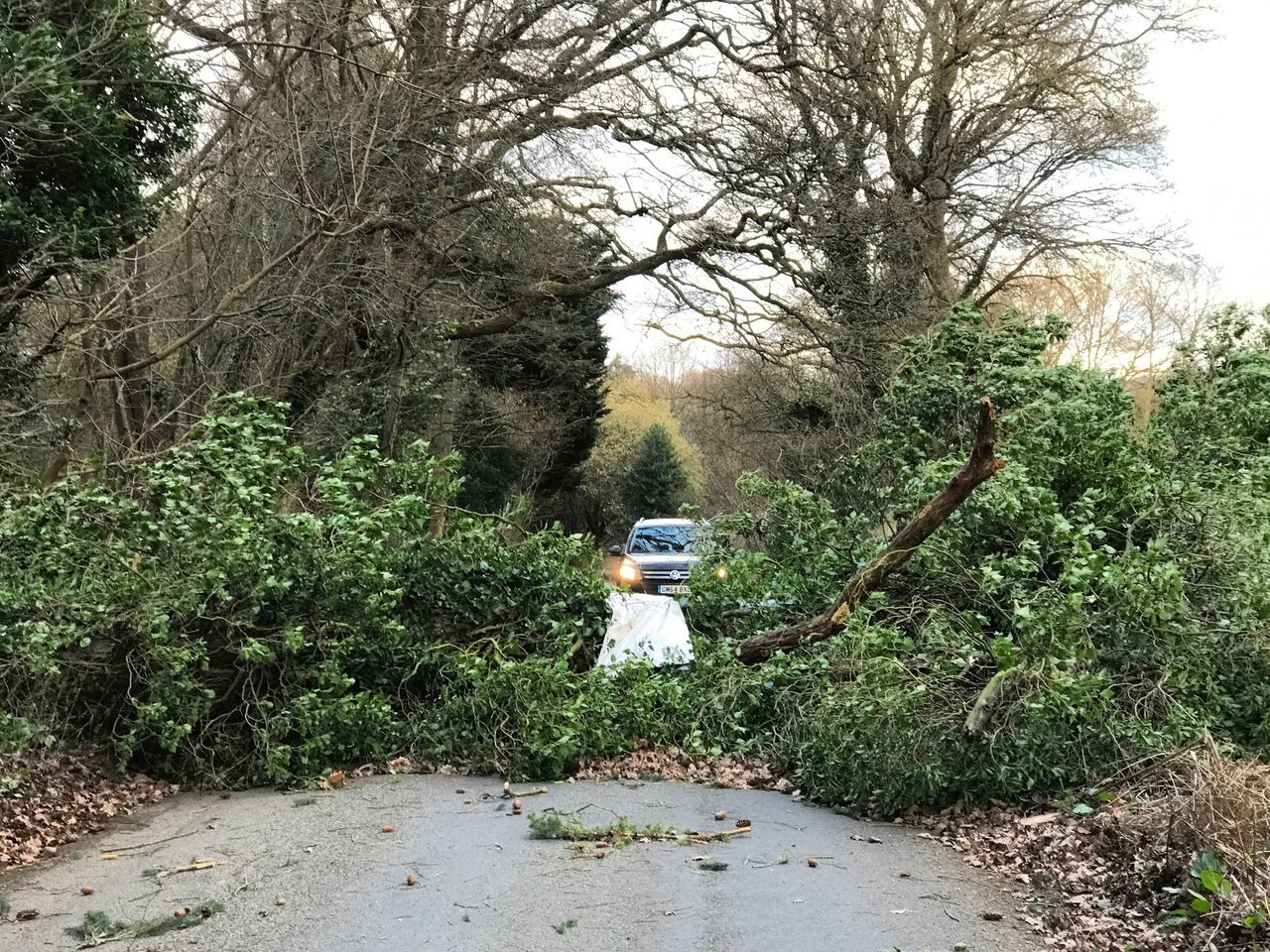 Storm Doris caused trees to fall in Surrey. Tree One Person Nature Forest Growth Plant Outdoors Beauty In Nature Standing Day Real People One Man Only Men Adults Only People Adult Young Adult Mammal Storm Doris Stormy Weather Gales Guildford Surrey Fallen Tree Fallen Trees