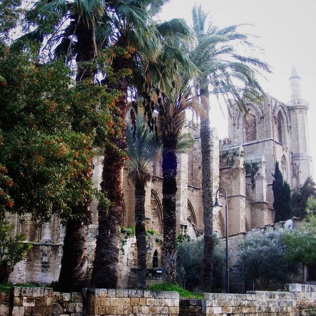 Famagusta TBT  Trees