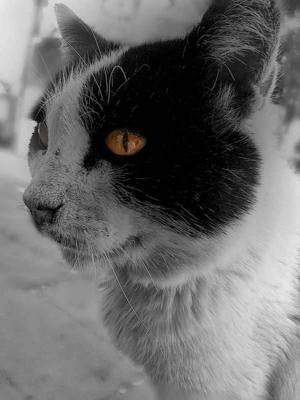 CatGato xD Playing With The Animals Beautiful Animals  Blackandwhite Cat