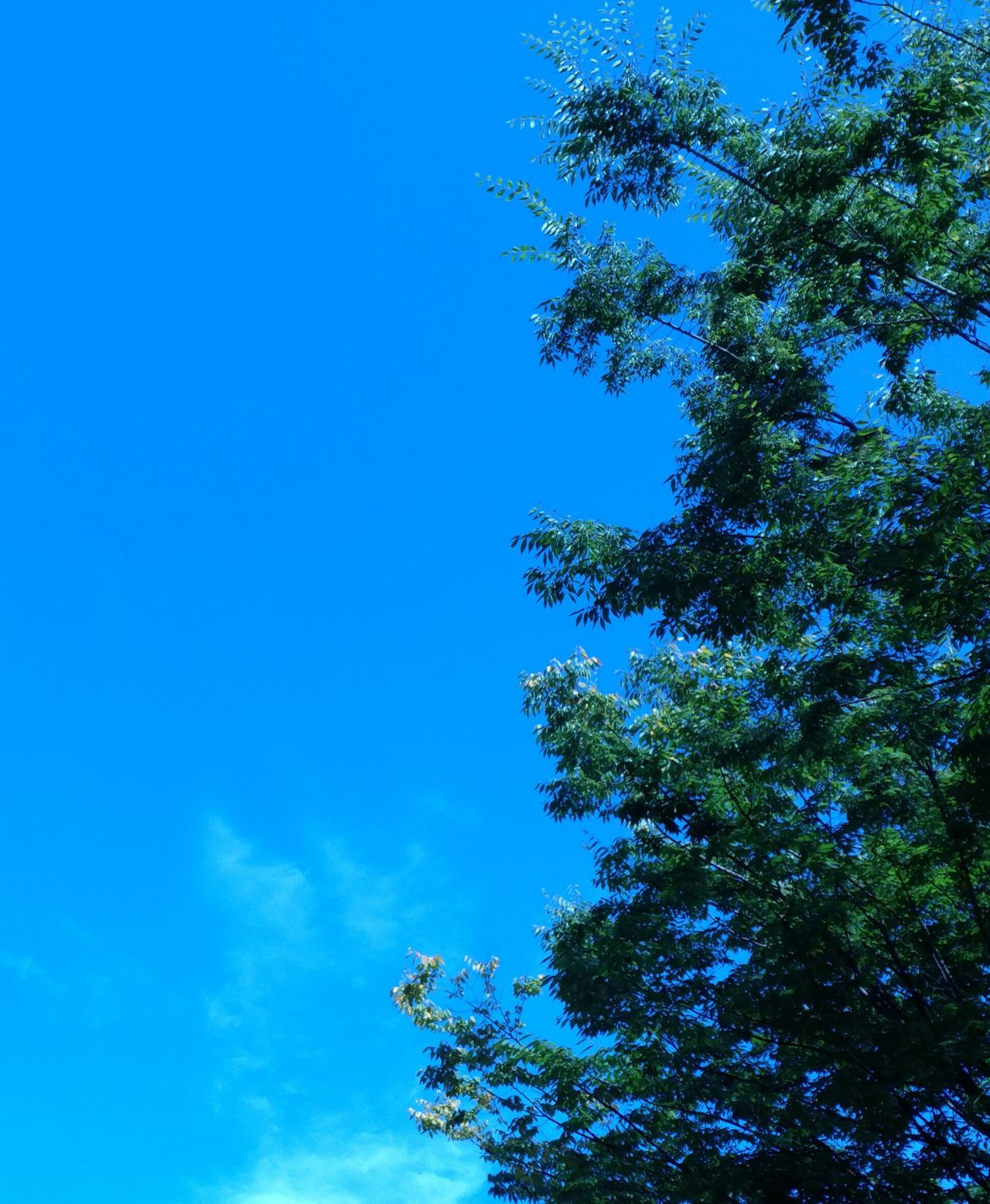 Sky Of The City Tree Blue Low Angle View Nature Sky Growth Beauty In Nature Tranquility Clear Sky Branch Treetop No People Day Outdoors Scenics