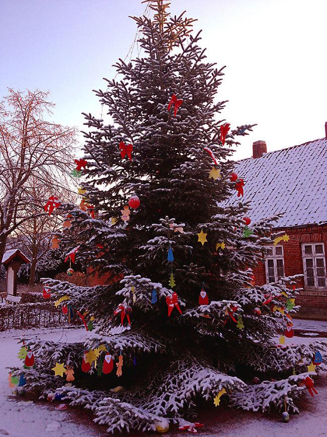 The Culture Of The Holidays Tree Snow Winter City Christmas Tree City Life Xmas Tree Weihnachten
