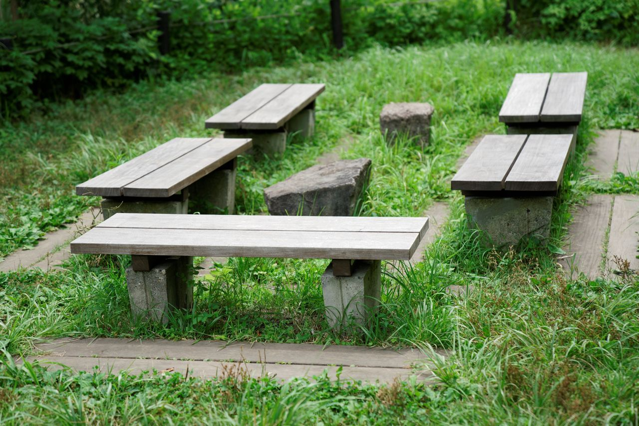 day, no people, wood - material, green color, outdoors, grass, nature, plant, seat, landscape, tree