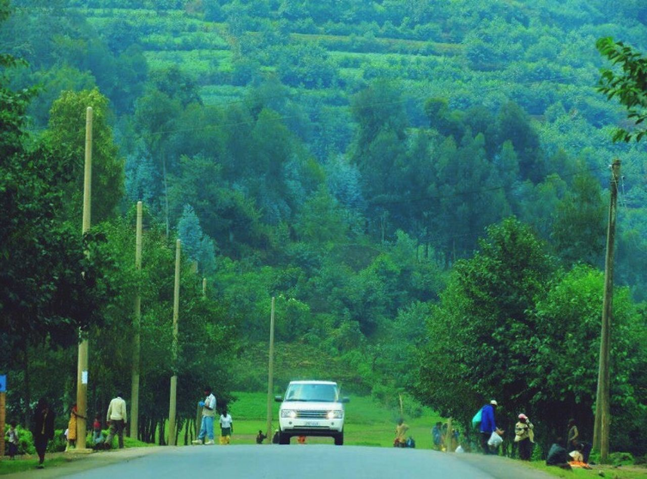 The Drive The Drive. Tree Green Color Land Vehicle Nature Rwanda Road Trip