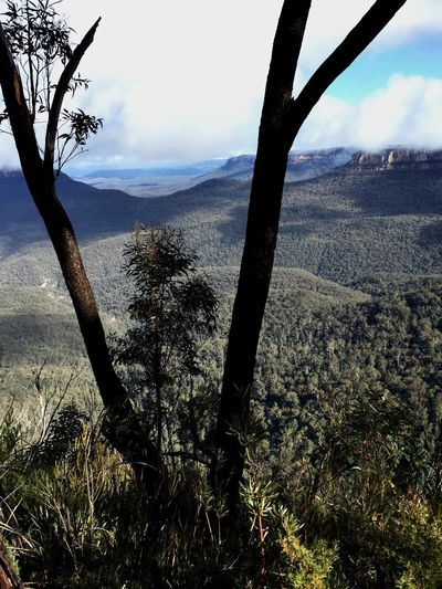 Tranquil Scene Tree Mountain Landscape Tranquility Scenics Blue Mountains Australia Eucalyptus Traveling Backpacking Tree Trunk Nature Non-urban Scene Sky Beauty In Nature Branch Plant Remote Solitude Mountain Range Field Outdoors Countryside