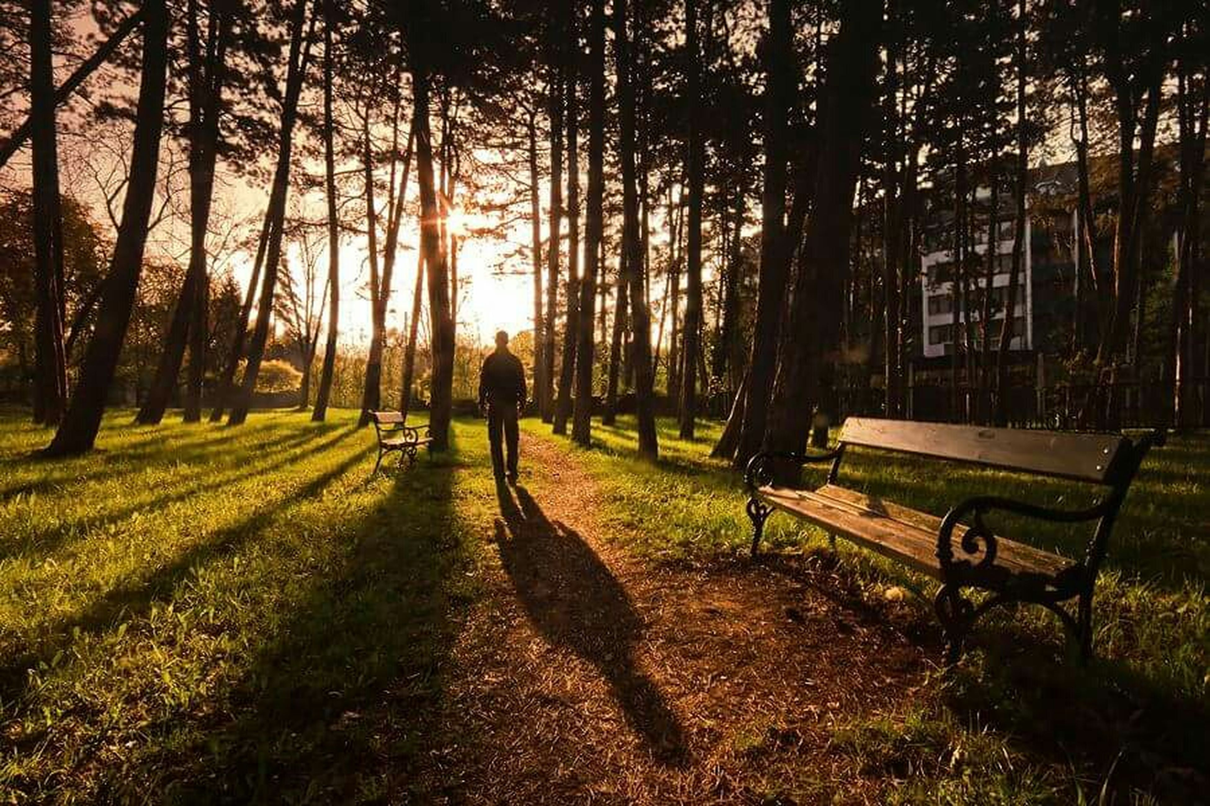 tree, lifestyles, leisure activity, walking, sunlight, men, shadow, grass, tree trunk, full length, growth, park - man made space, rear view, nature, field, tranquility, footpath, person