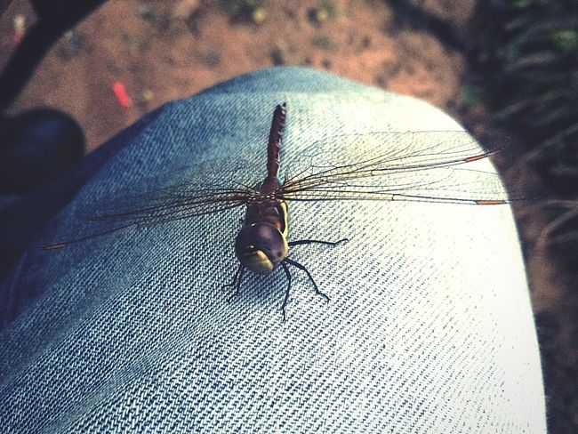 Alien invasion!! Behold human, I control you now.. 😄 Dragonfly Butterfly Fly Hello World Taking Photos