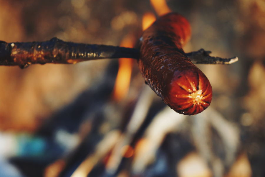 grilling sausage out Close-up No People Outdoors Tranquil Scene Beauty Of Nature Winter Cold Temperature Sausage Grilling Grilling Out Grilling Outside Fire Woodfire Campfire Campfire Flames Flame Flames Food Food And Drink Outdoor Photography