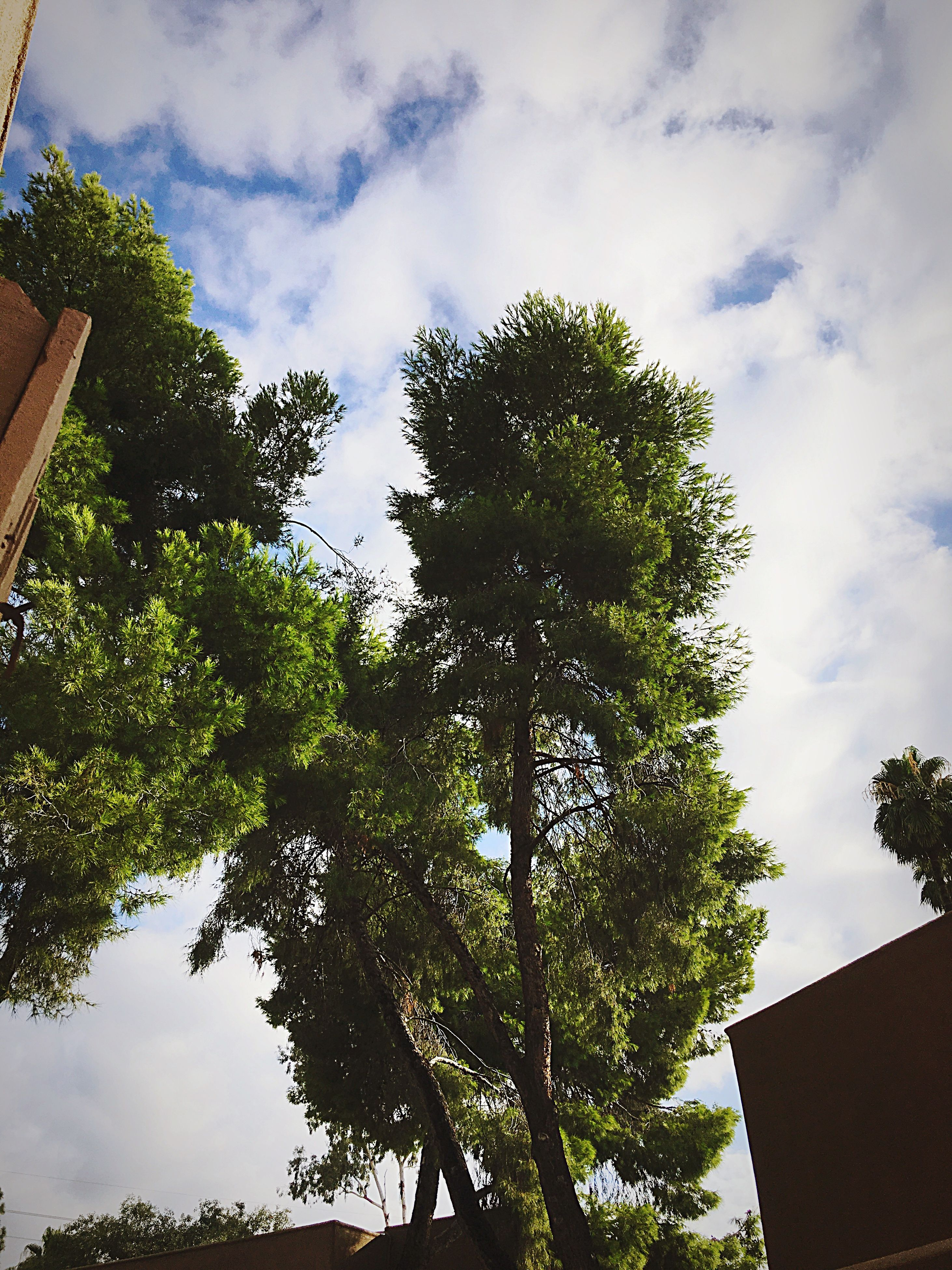 tree, low angle view, sky, growth, branch, tree trunk, cloud - sky, green, nature, day, scenics, cloud, tranquility, green color, outdoors, tranquil scene, beauty in nature, cloudy, treetop, lush foliage, tall - high, no people