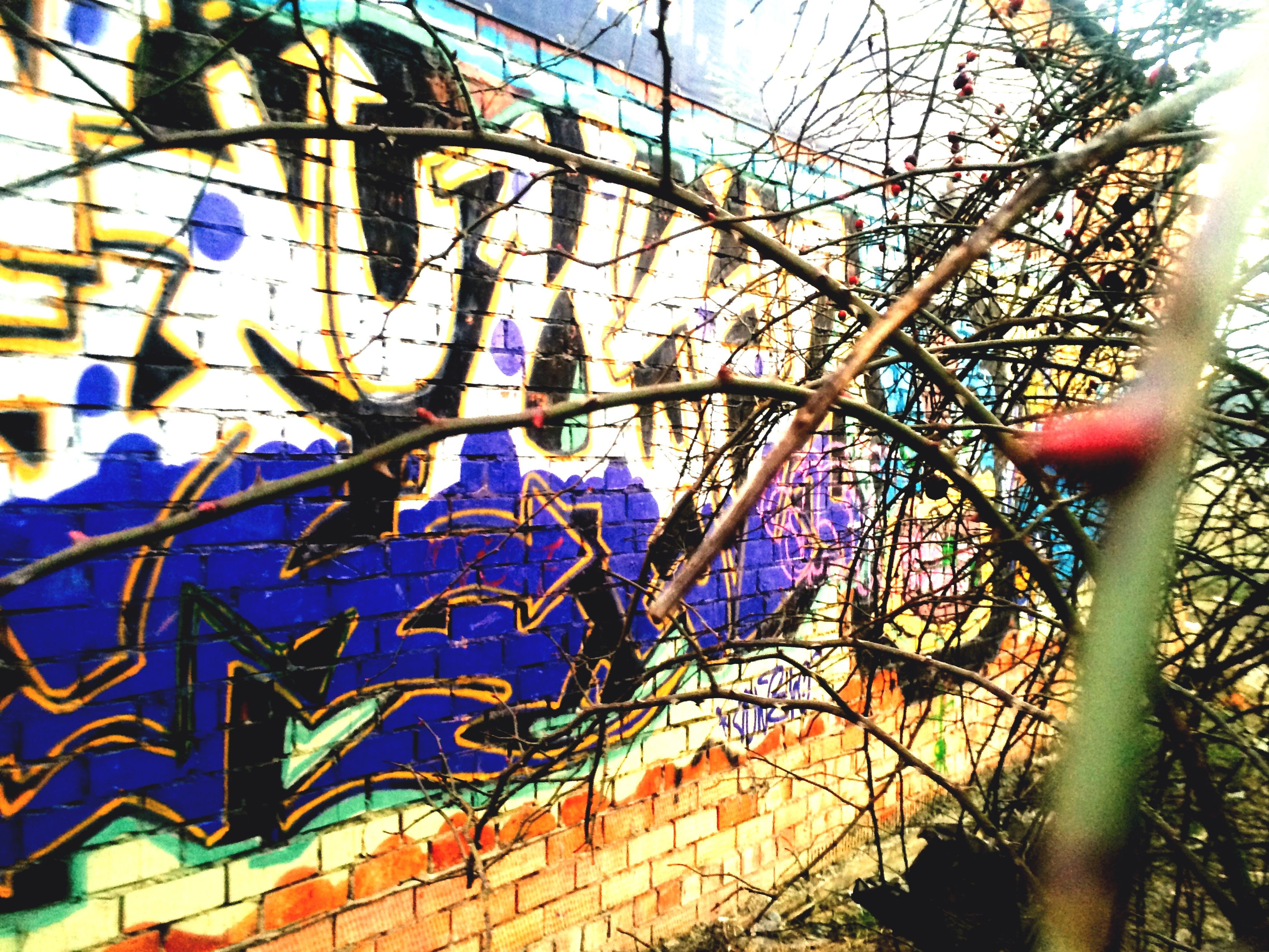 graffiti, built structure, architecture, building exterior, creativity, multi colored, low angle view, blue, art, text, art and craft, wall - building feature, communication, day, western script, tree, sky, outdoors, no people, wall
