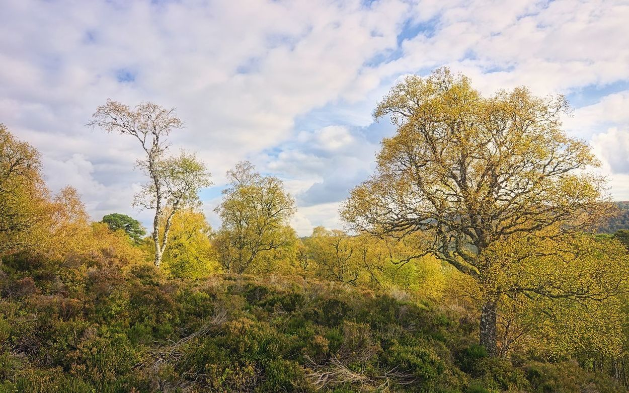 Sunlight, heather and trees - Glen Affric Glen Affric Eye Em Scotland Highlands Scotland The Great Outdoors - 2015 EyeEm Awards Light Trees Hugging A Tree Birch