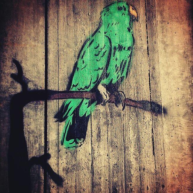 Streetart Parrot