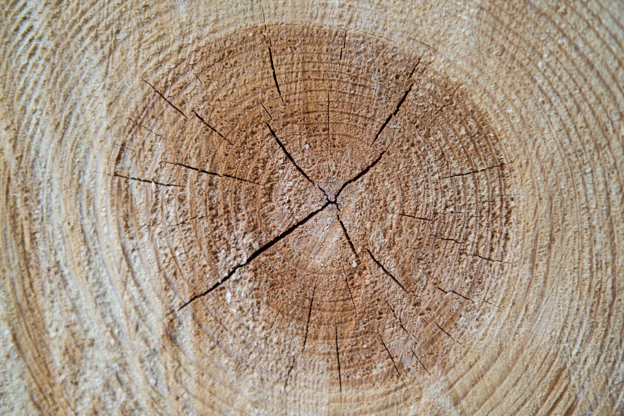 tree ring, tree stump, wood - material, cracked, textured, tree trunk, deforestation, concentric, timber, cross section, backgrounds, nature, close-up, log, tree, no people, day, outdoors
