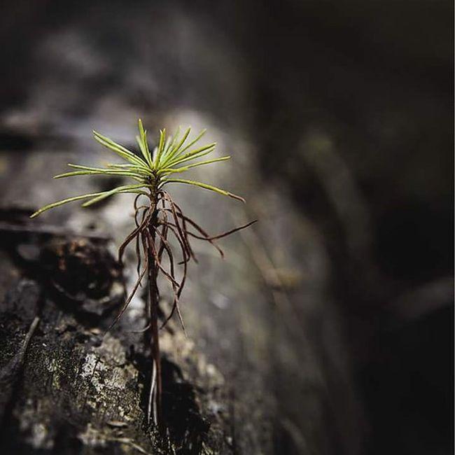 The lonely tree Makros Fotografie Michaellangerfotografie
