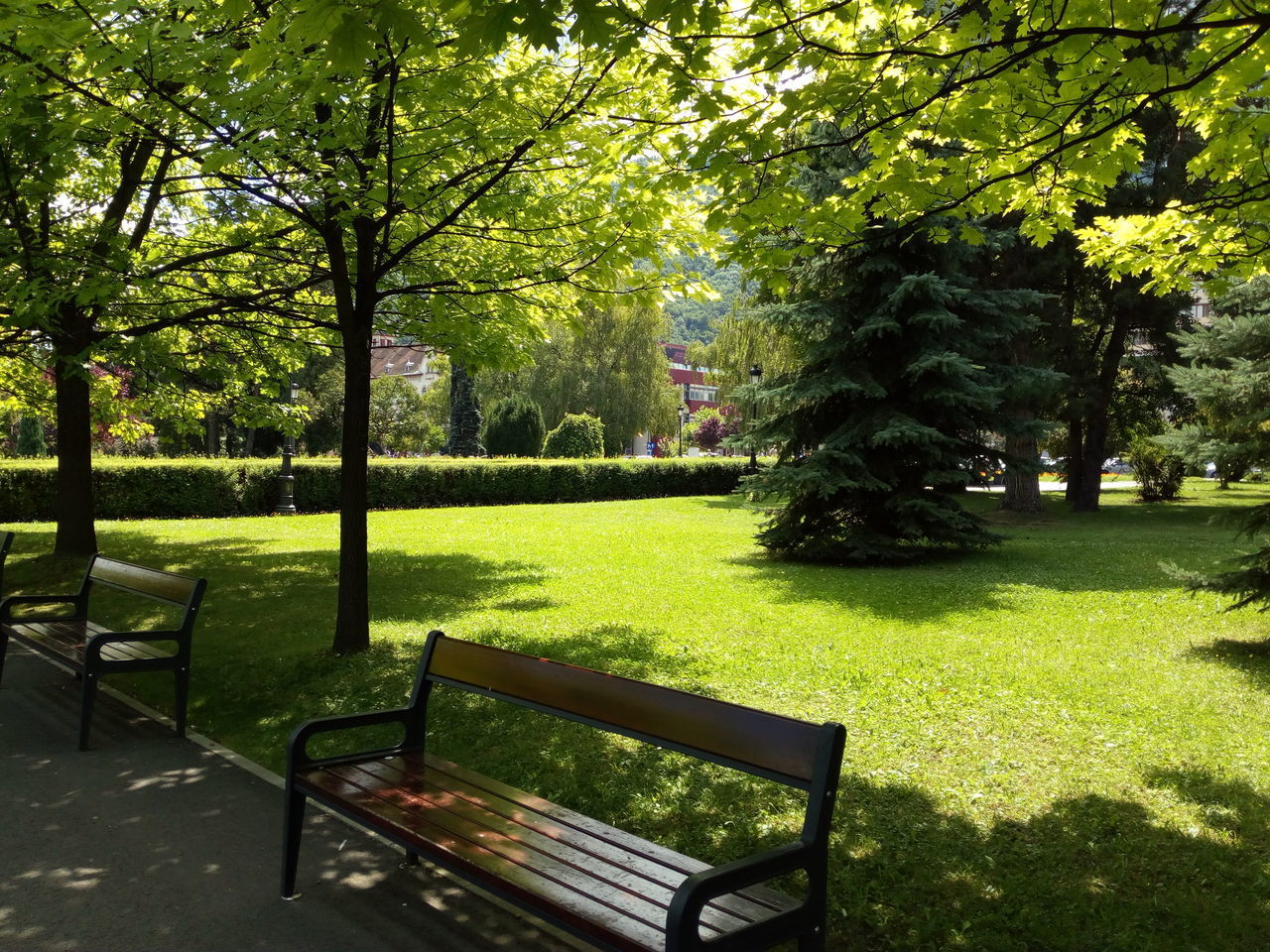 tree, grass, tranquility, nature, park - man made space, growth, no people, outdoors, day, landscape, beauty in nature, scenery