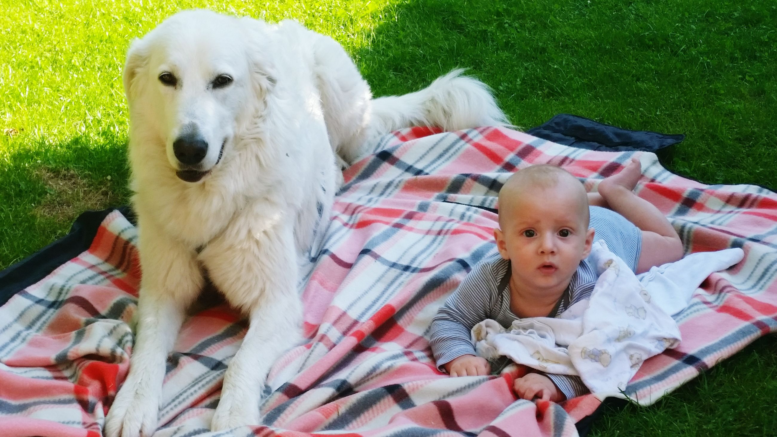 childhood, grass, cute, innocence, elementary age, animal themes, dog, girls, boys, high angle view, looking at camera, domestic animals, pets, person, field, toddler, one animal, playful, relaxation