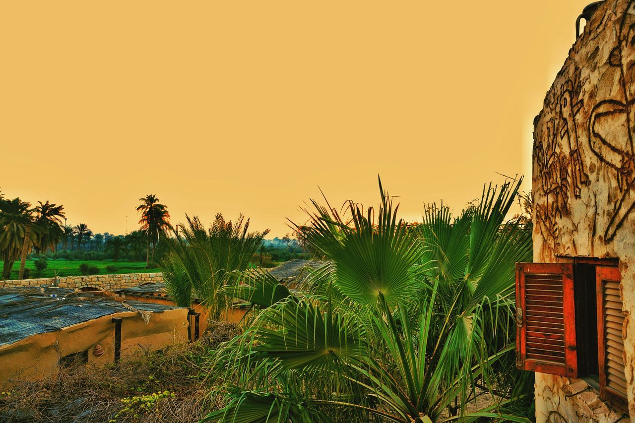 sunset, nature, palm tree, growth, scenics, beauty in nature, outdoors, no people, sky, tree, tranquility, tranquil scene, clear sky, plant, beach, sea, day