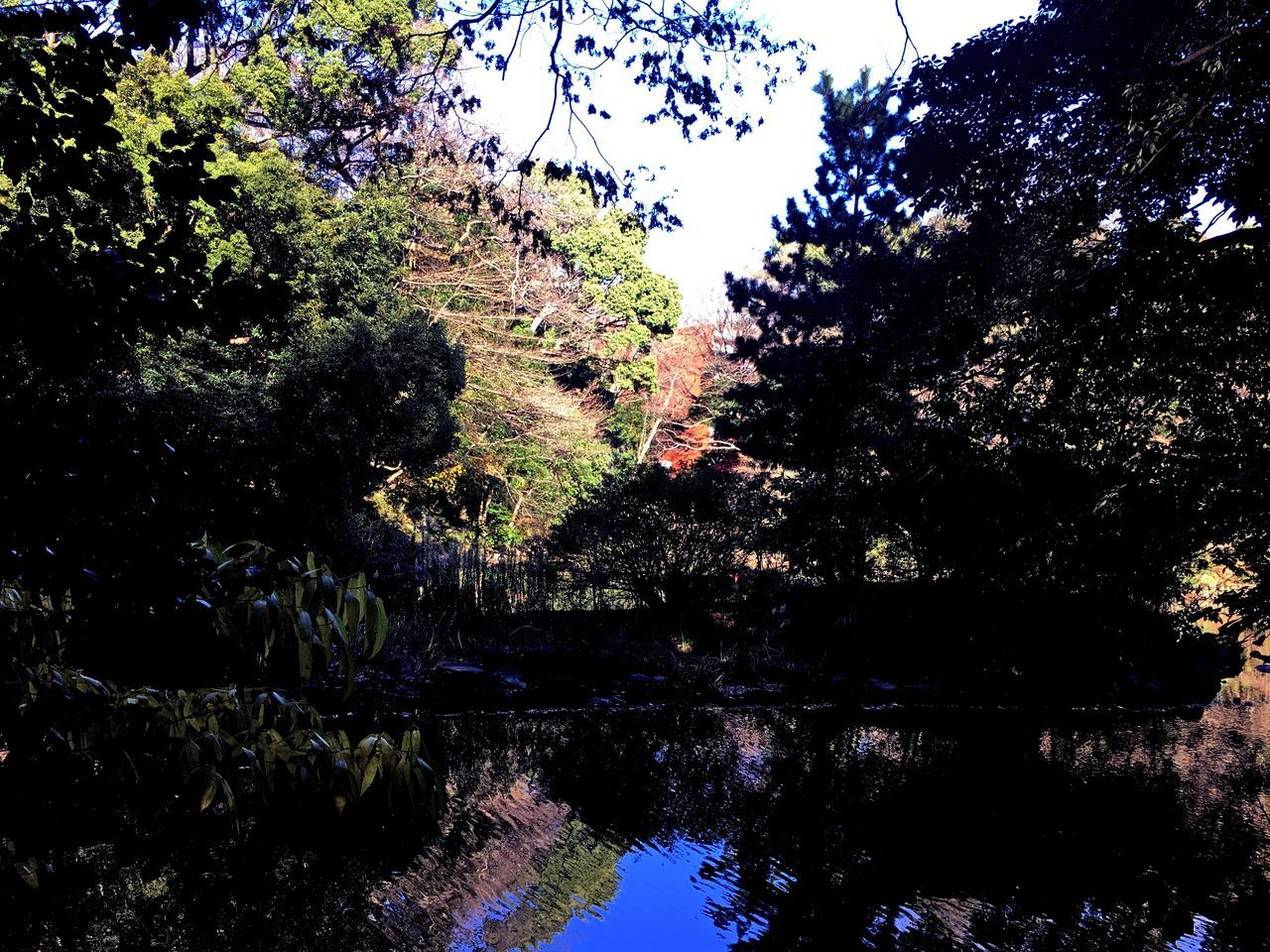 #hongo3tyoume #Tokyo Beauty In Nature Forest Nature No People Outdoors Sky Tree Water